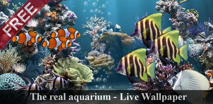 the-real-aquarium